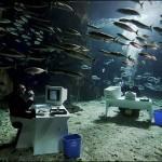 Офисный планктон