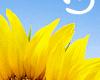 Аватар пользователя Агидиус