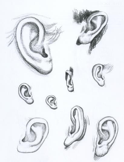 Как правильно рисовать уши